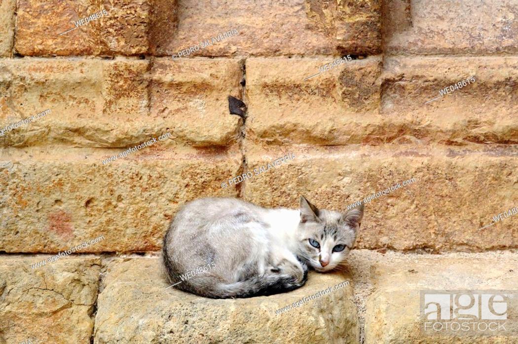 Stock Photo: Stray cat. Molinos.Teruel. Aragón. Spain.