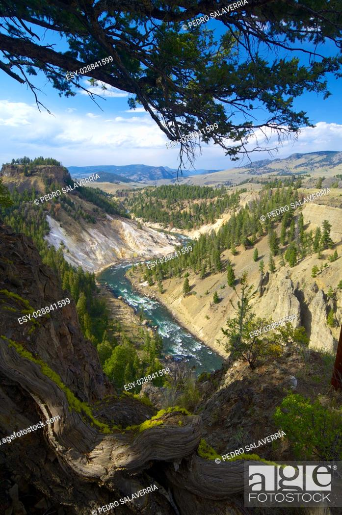 Imagen: Yellowstone river in Tower Roosevelt Area, Yellowstone National Park, United States.