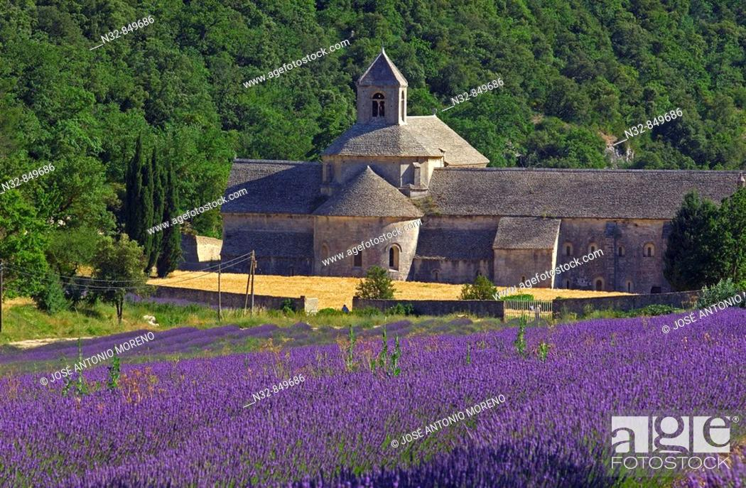 Stock Photo: Lavender fields and Senanque abbey, Gordes, Vaucluse, Provence, France.