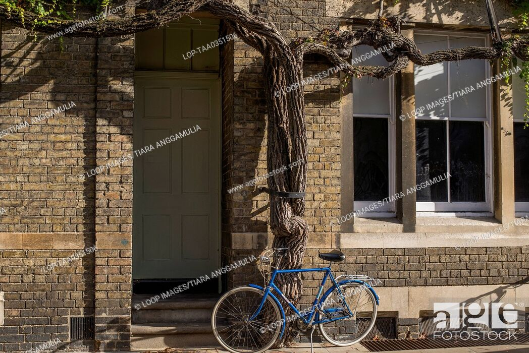Imagen: Bicycle propped up against a tree in central Oxford.