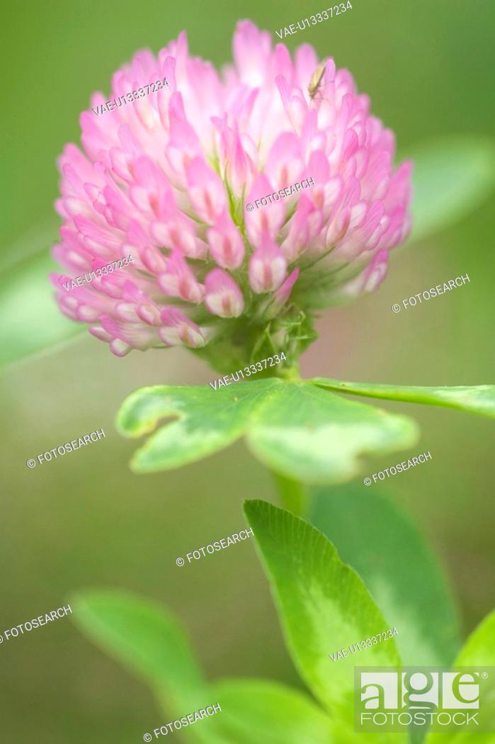 Stock Photo: Blurred, Beauty, Bloom, Blossom, Daytime.