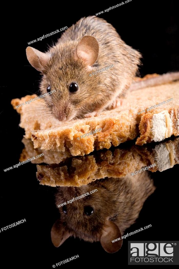 Stock Photo: brotkrume, aliment, bread, animals, animal, alfred.