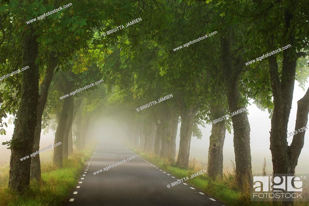 Stock Photo: Avnue in fog.