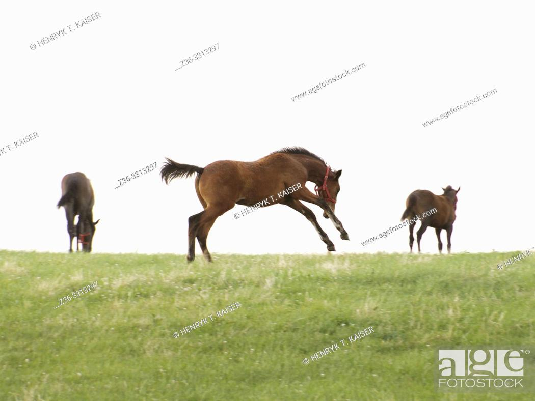 Stock Photo: Horses on a field.