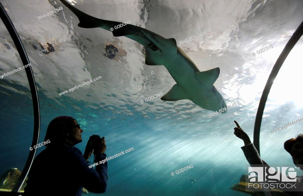 Stock Photo: Acrylic glass tunnel where sharks swim above visitors, Sydney Aquarium, Sydney, New South Wales, Australia, Pacific.