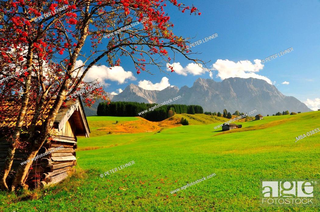 Stock Photo: Germany, Bavaria, Isar valley, hump meadows, barn, mountain ash, Karwendel mountains,.