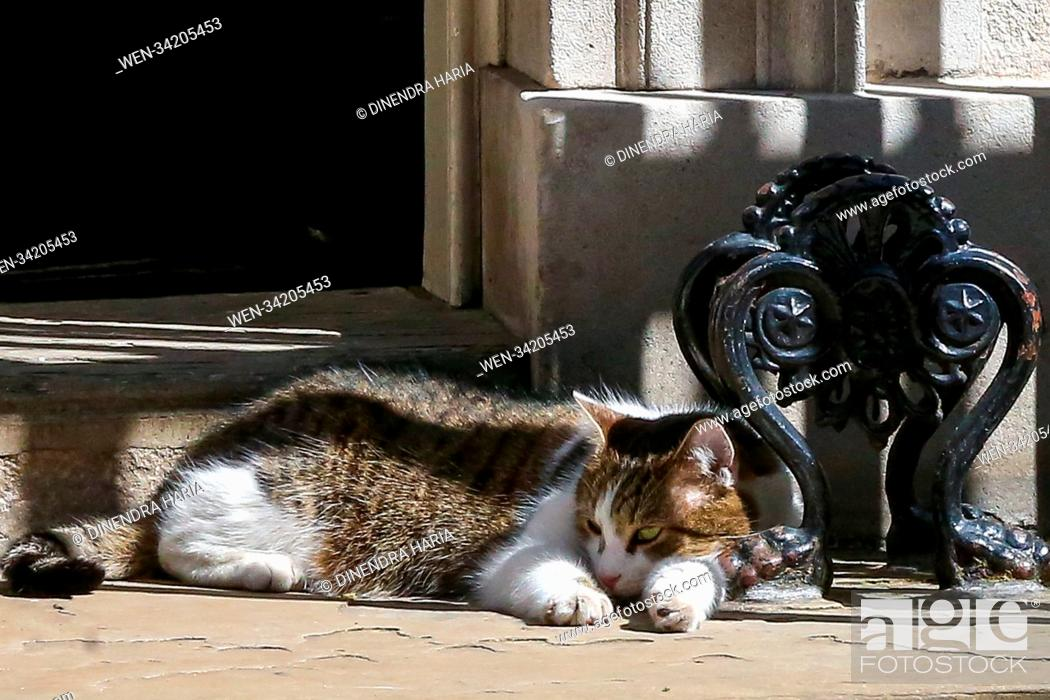Larry the 10 Downing Street cat and Chief Mouser to the