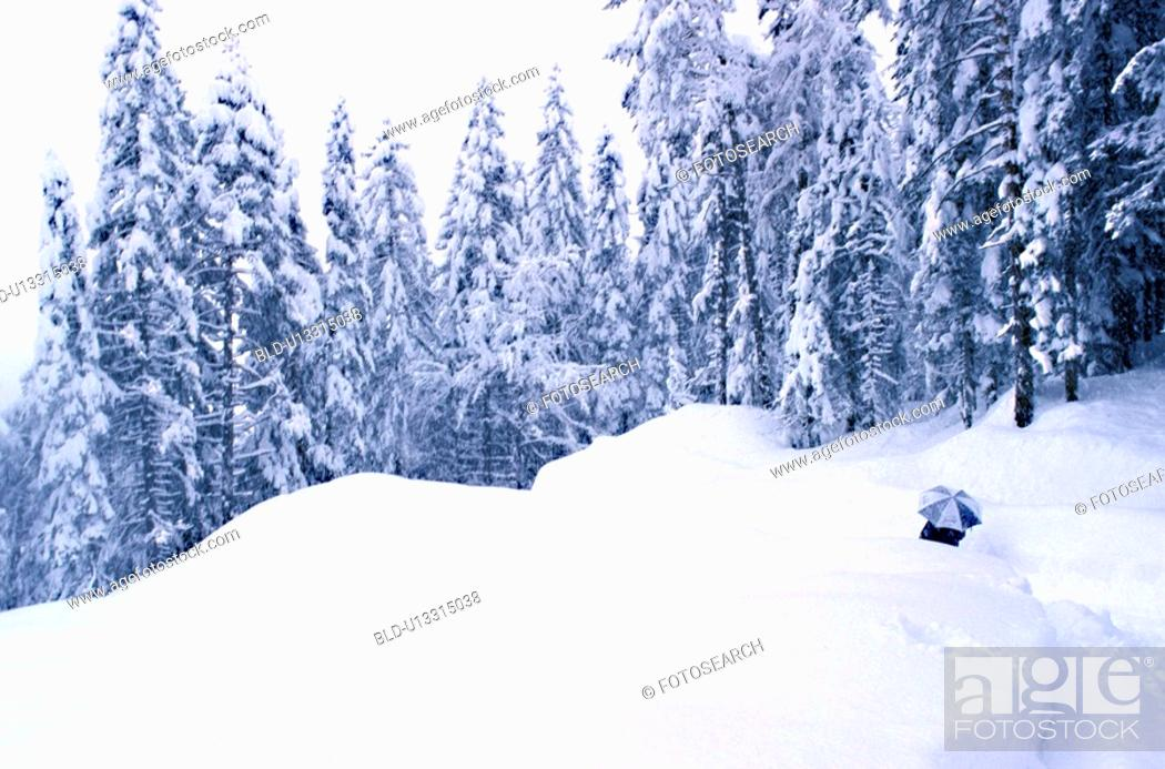 Stock Photo: Person walking in the snow covered woods.