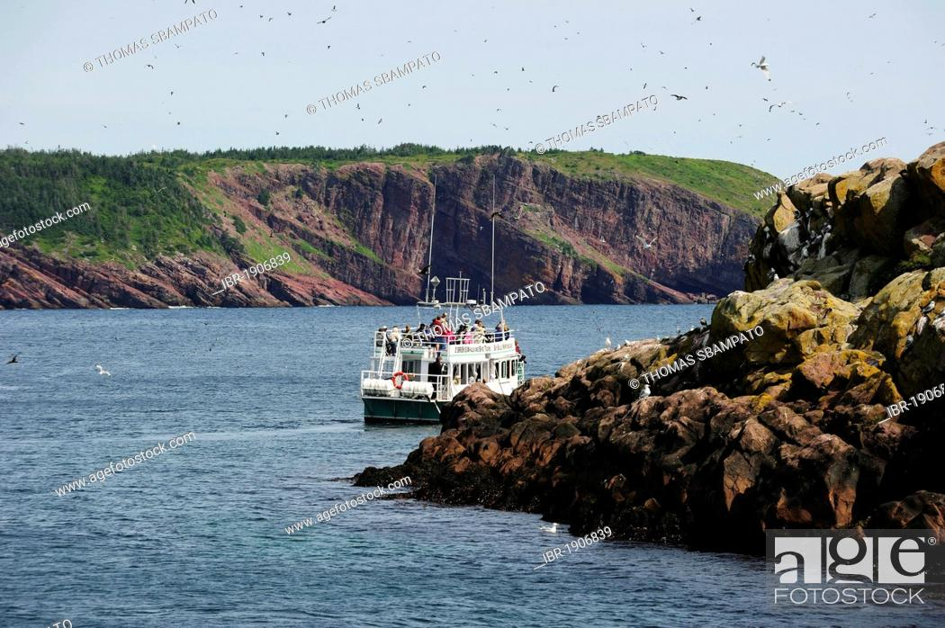 Stock Photo: Bird and whale watching by boat, Witless Bay, Newfoundland, Canada, North America.