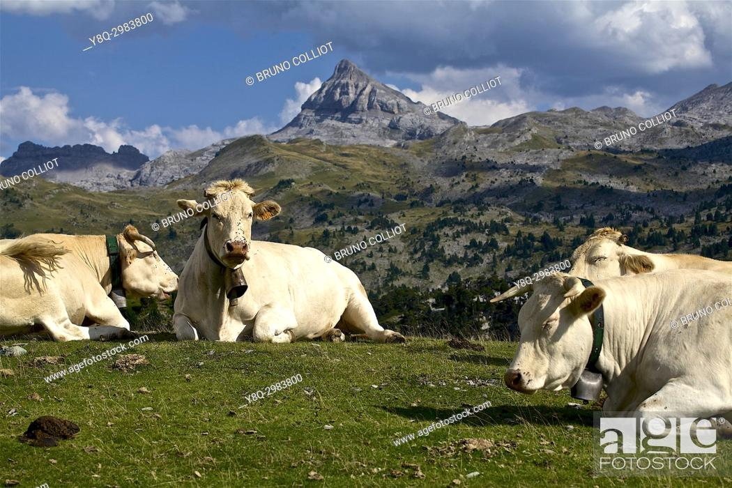 Stock Photo: pastoralism at the pass of the stone st martin on the peak of Anie in the background. GR10. . The neck of the Pierre Saint-Martin is a mountain pass of the.