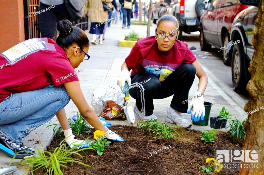 Stock Photo: Hispanic community service volunteers of the Harlem Spanish Manhattan Seventh Day Adventist Church plant flowers in an East Harlem neighborhood public sidewalk.