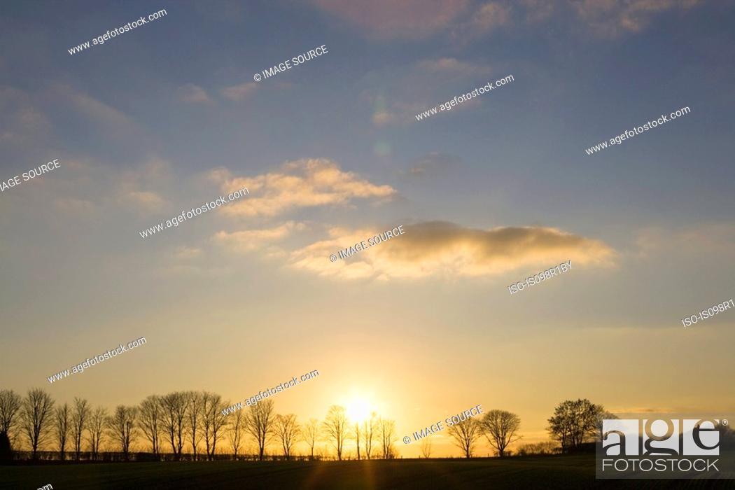 Stock Photo: Silhouetted trees.