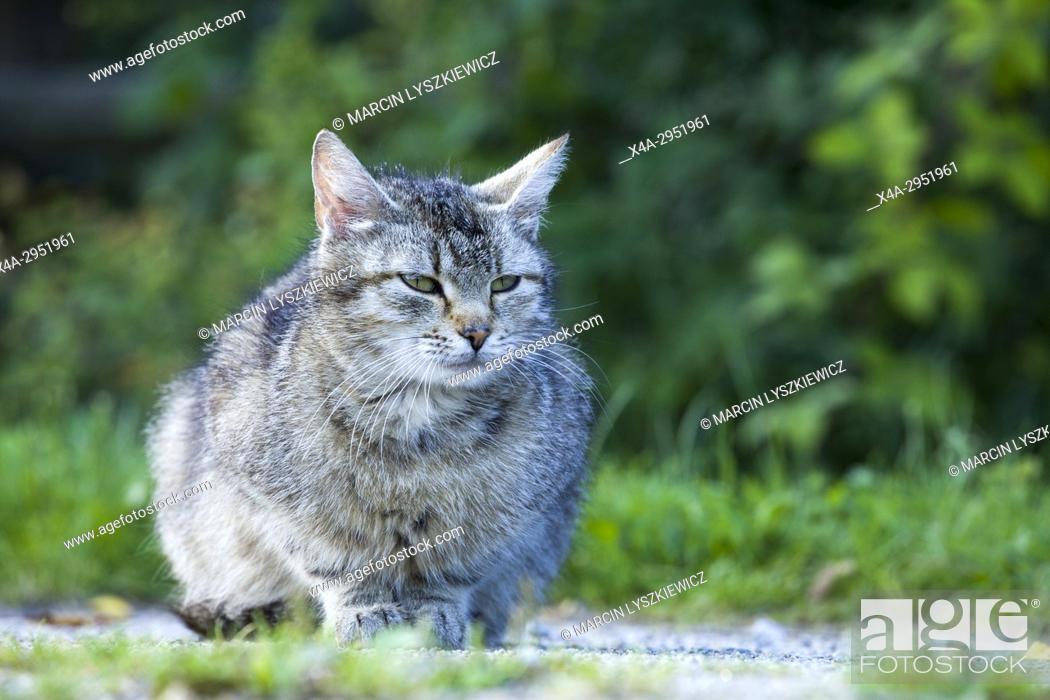 Stock Photo: Portrait of a Cat.