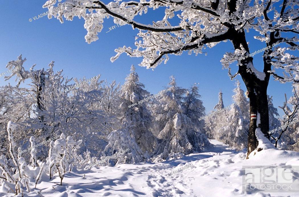 Stock Photo: Winter scenery at Skalnata, Male Karpaty, Slovakia.