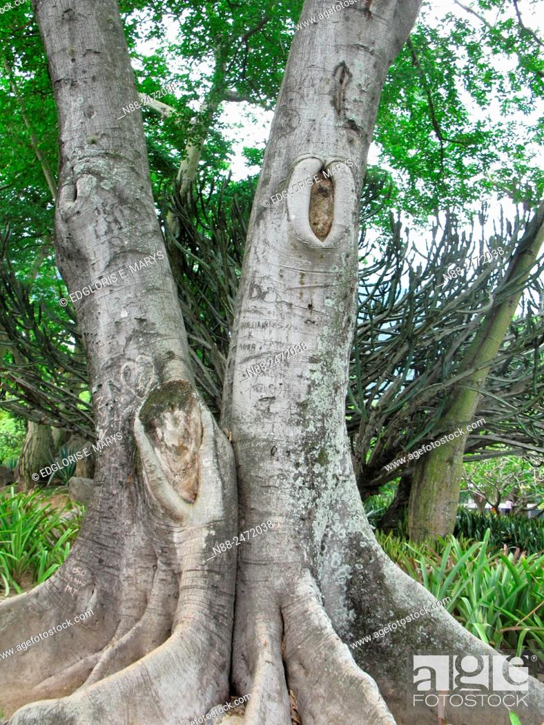 Stock Photo: Tree trunks and roots.
