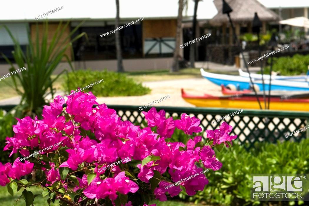 Stock Photo: Close-up of flowers, Kona, Big Island, Hawaii Islands, USA.