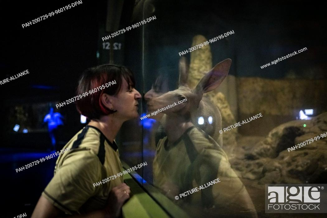 Stock Photo: 28 July 2020, Hessen, Frankfurt/Main: In the dim twilight of the Grzimek House at Frankfurt Zoo, district manager Astrid Parys makes contact with one of the.