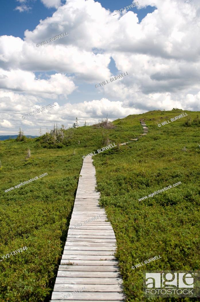 Stock Photo: Boardwalk on the Plateau Lookout Trail Gros Moren National Park Newfoundland and Labrador.