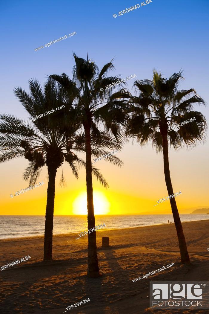 Stock Photo: Palm trees at sunset. El Cenicero beach, El Morche, Torrox coast. La Axarquia, Malaga province. Costa del Sol, Andalusia. Southern Spain Europe.