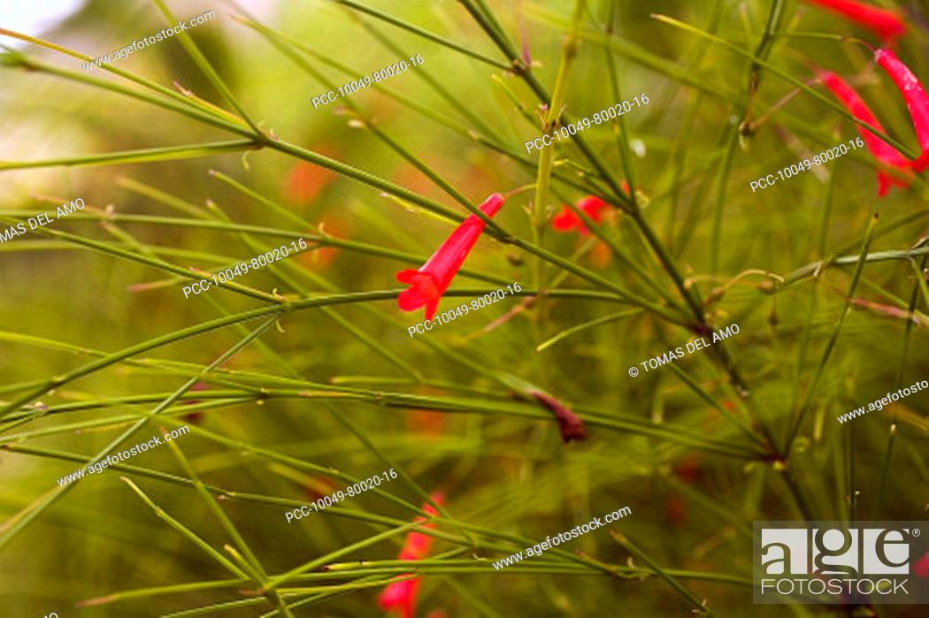 Stock Photo: Close-up of bright pink flowers in amongst green stems.