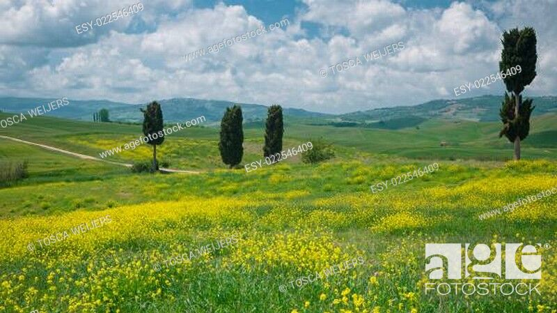 Stock Photo: View on cypresses in wide Tuscan landscape.