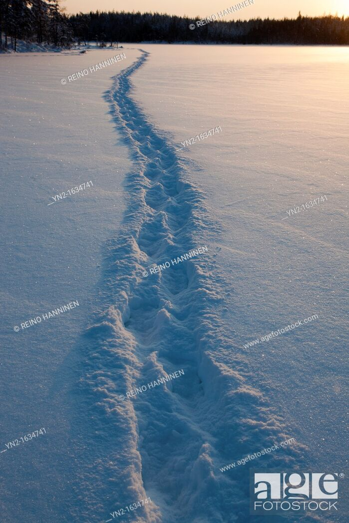 Stock Photo: Human trail on snow on frozen lake ice at midwinter  Location Mustalampi Suonenjoki Finland Scandinavia Europe EU.