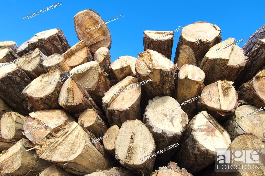 Stock Photo: group of pine logs cut.