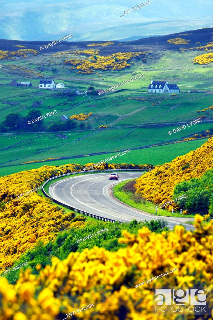 Imagen: A9 main trunk road climbs 2 miles north of Helmsdale, Sutherland on Scotlands N. E. coast. Looking south over early summer yellow gorse and farmland.
