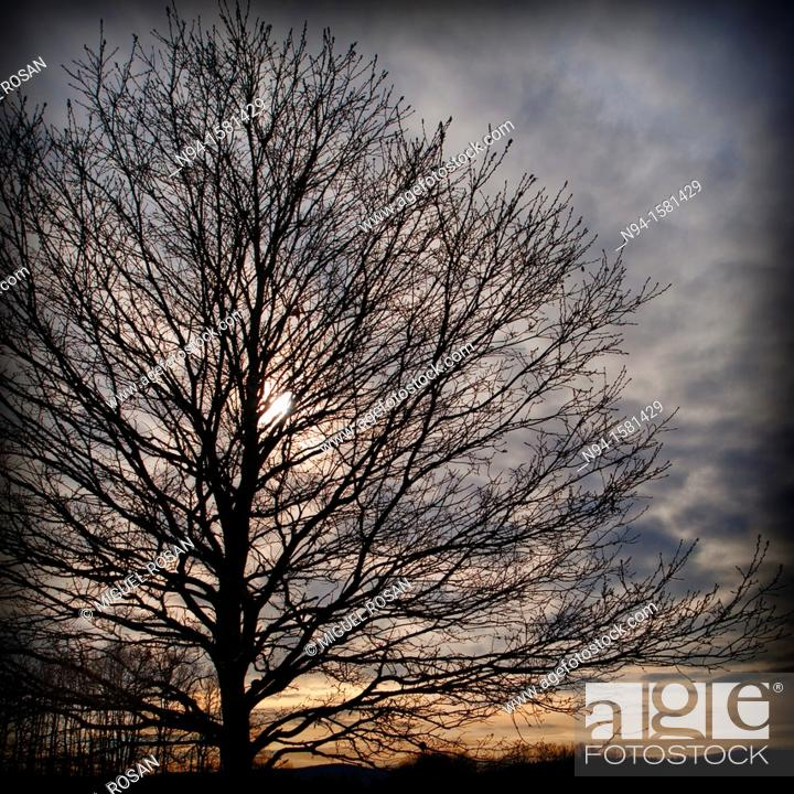 Stock Photo: Dry tree backlit in to town of Mostar, Bosnia-Herzegovina.