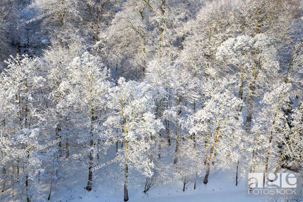 Stock Photo: Winter Trees and Sunlight Knaresborough North Yorkshire England.