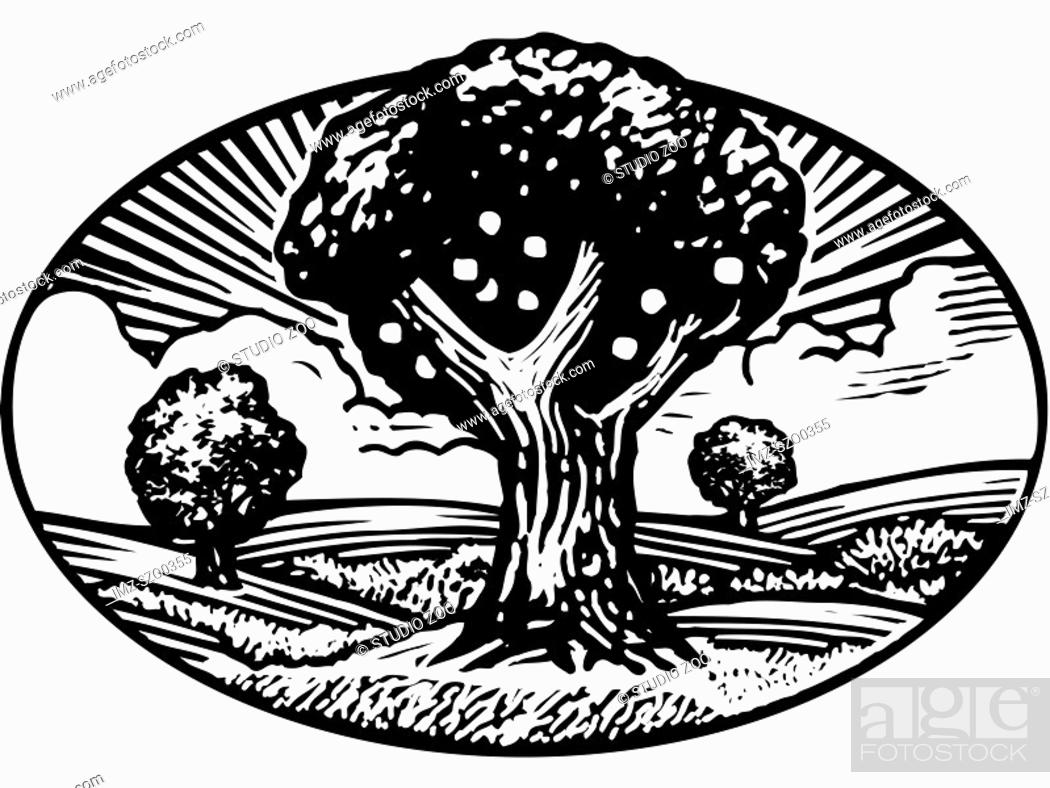 Stock Photo: Oval shaped nature scene of apple tree in orchard, black and white.