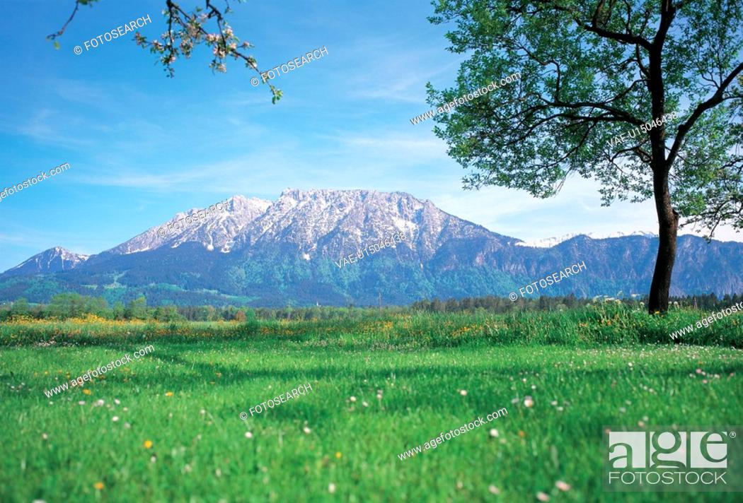 Stock Photo: nature, tree, field, landscape, scenery, mountain.