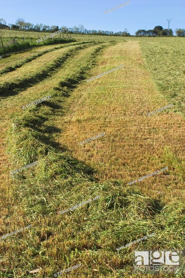 Stock Photo: earth, farm, array.