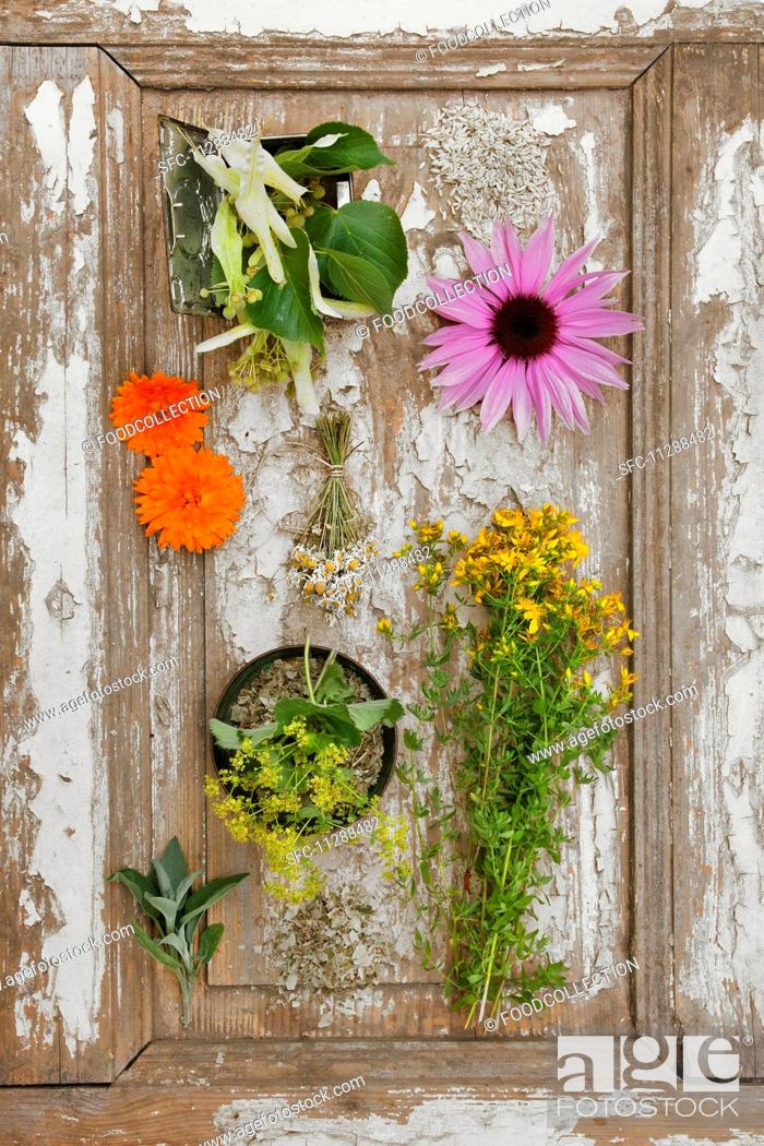 Stock Photo: Arrangement of various fresh and dried medicinal herbs.