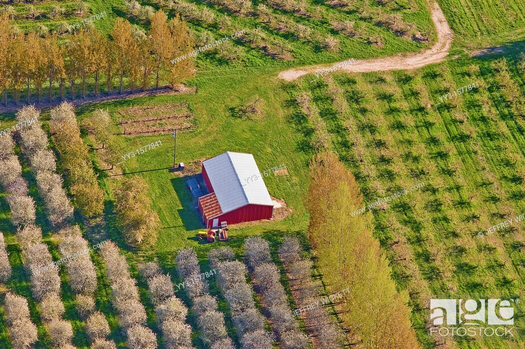 Stock Photo: Aerial view, spring-time orchards, Mason county, Michigan, USA.