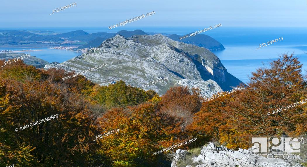 Stock Photo: Beech forest in autumn at Cerredo Mountain, Cantabrian Sea, MONTAÑA ORIENTAL COSTERA MOC, Castro Urdiales, Cantabria, Spain, Europe.