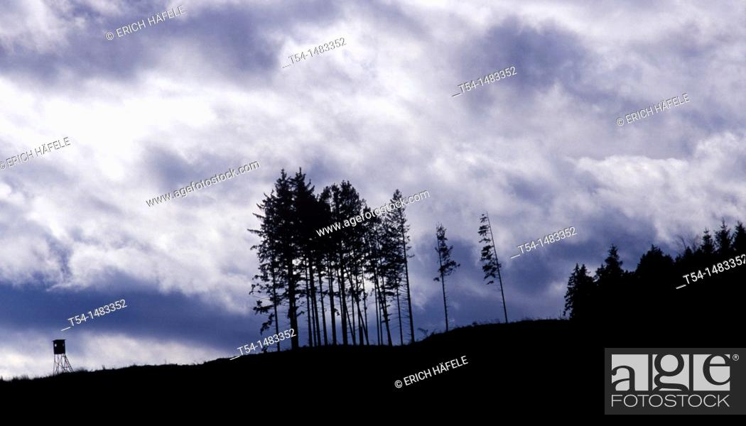 Stock Photo: The gloomy mood after cutover forest.