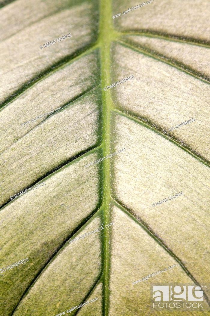 Stock Photo: Close up pattern on a leaf.
