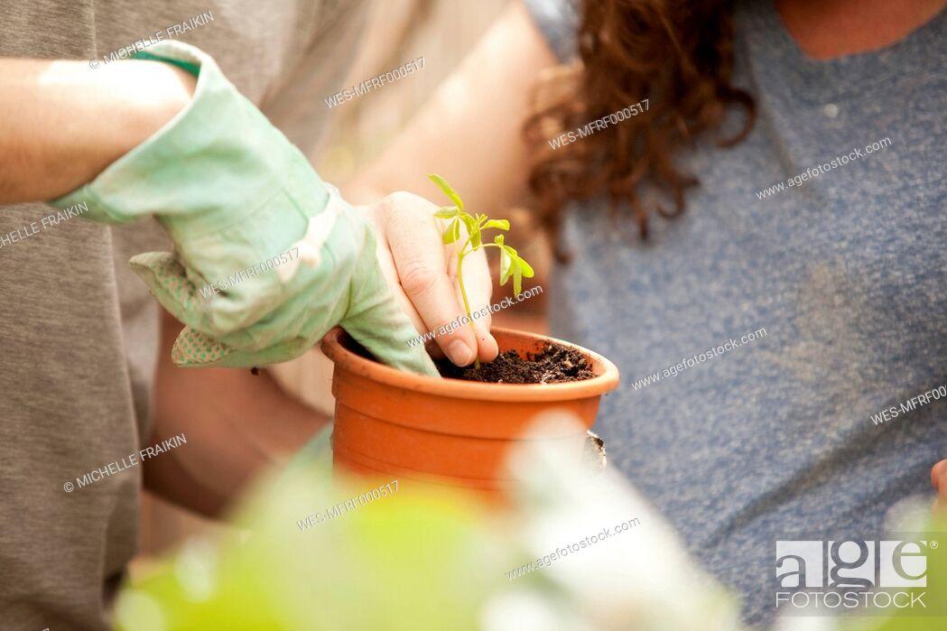 Stock Photo: Man and woman planting Moringa seedling.