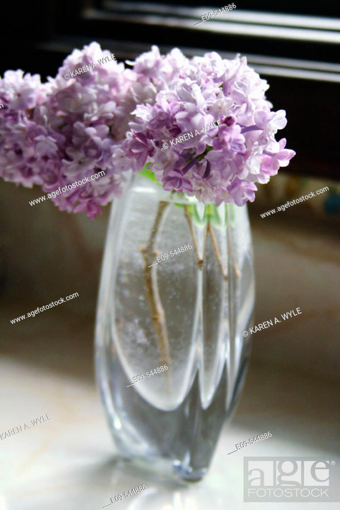 Stock Photo: Lilacs in a glass vase on a kitchen counter, sunlit, stems and water drops on stems showing.