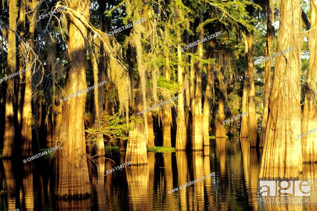 Stock Photo: Atchafalaya Basin, Henderson, Louisiana, United States of America, Americas.