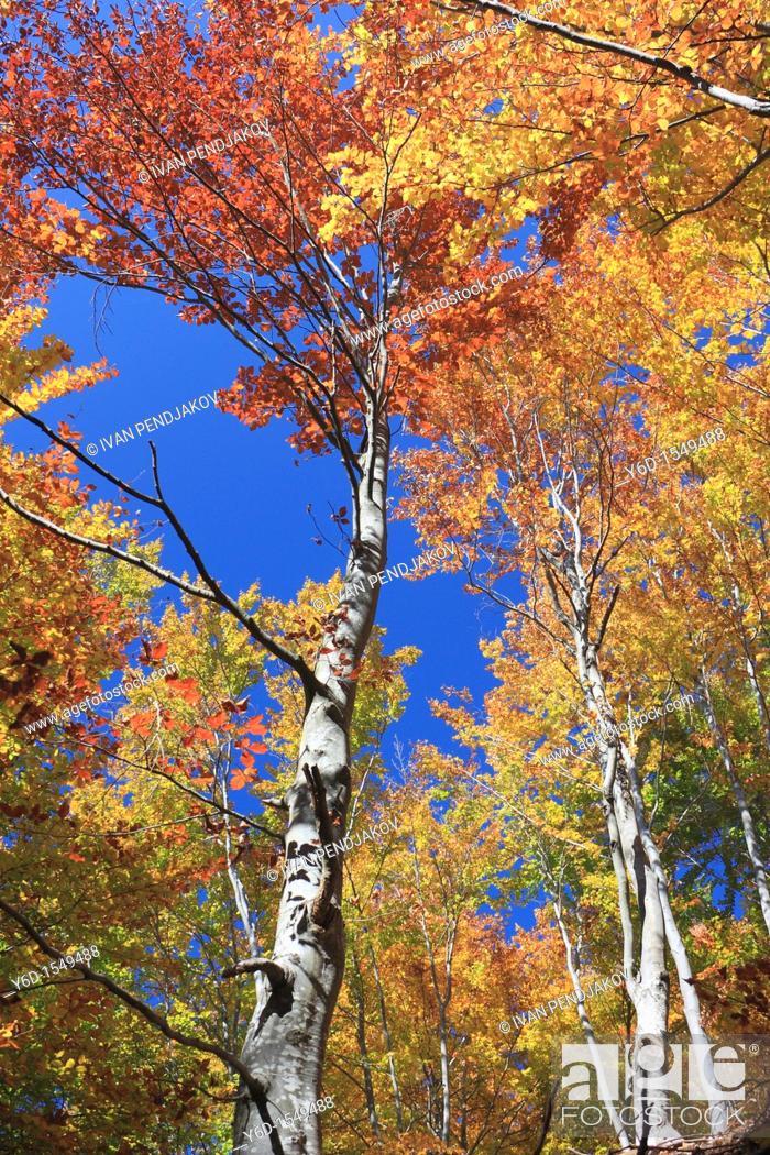 Stock Photo: The Colors of Autumn, Rila Mountains, Bulgaria.