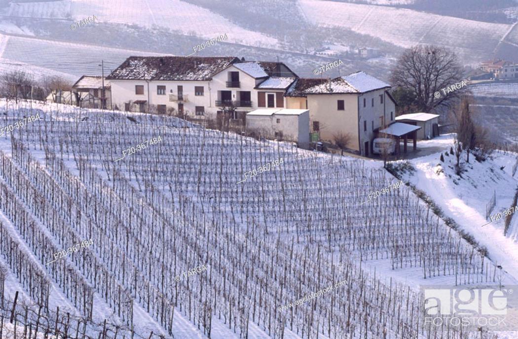 Stock Photo: Country landscape near Barbaresco. Langhe region, Piedmont, Italy.