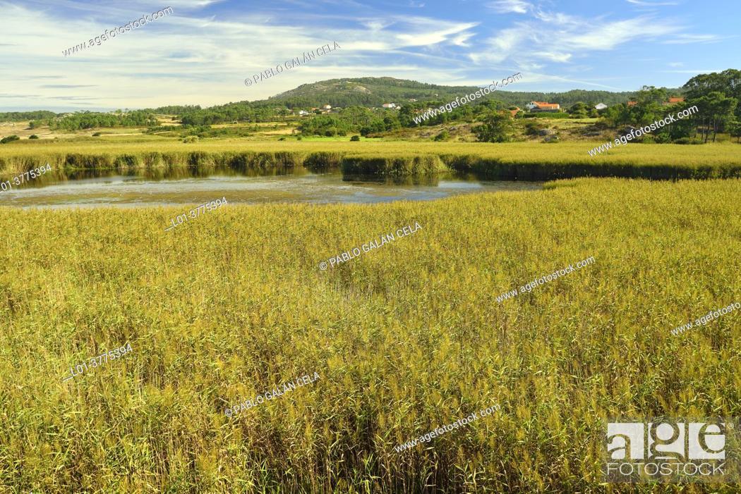 Stock Photo: Vixian Lagoon. Dunes of Corrubedo Natural park. Galicia (Spain).