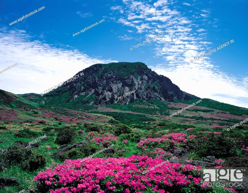 Mt Hallasan National Park Jeju Island Korea Stock Photo Picture And Rights Managed Image Pic Pic 572596 Agefotostock