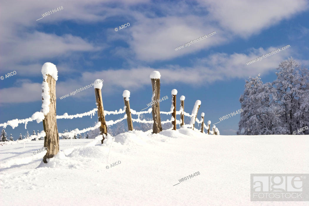 Stock Photo: Snow covered poles.