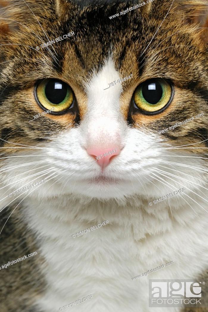 Stock Photo: Cat, Close Up.