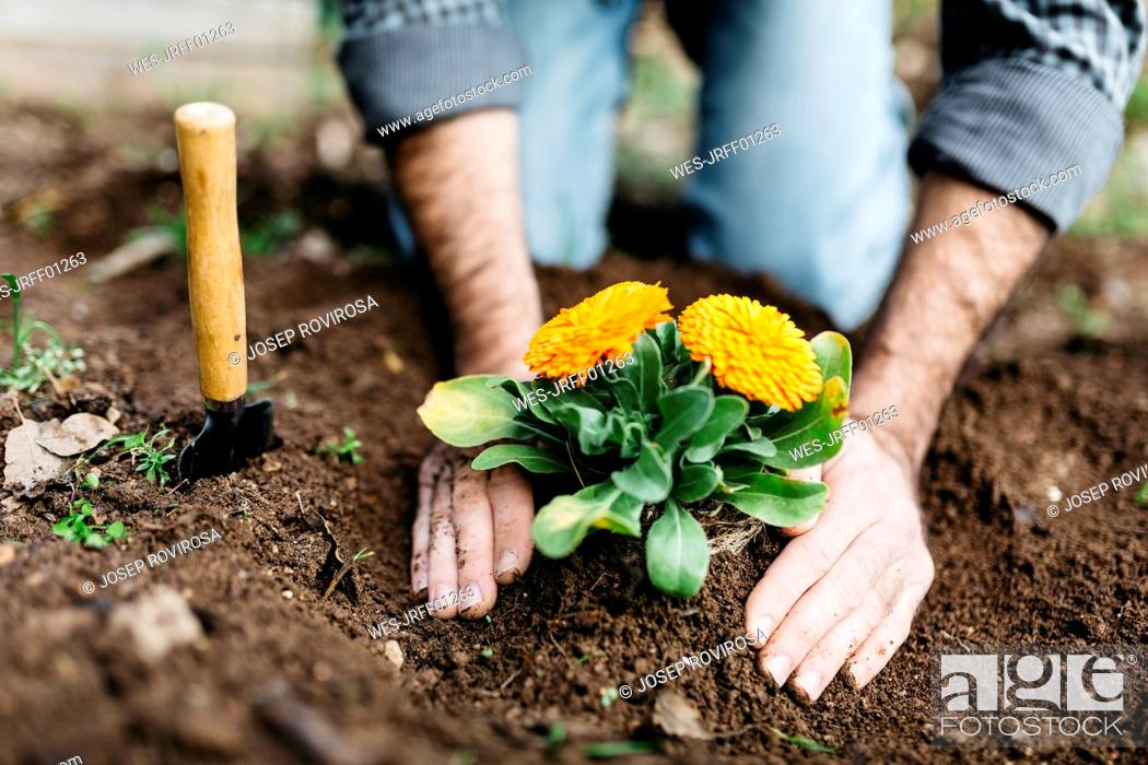 Imagen: Man planting flowers in his garden.
