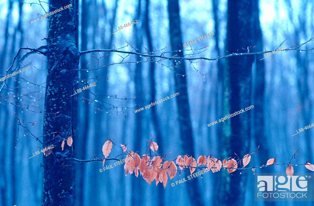 Stock Photo: Forest in winter.