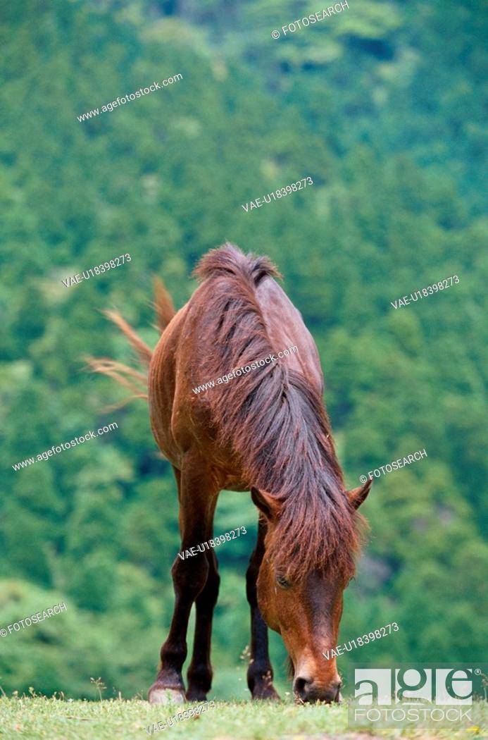 Stock Photo: Grazing Pony.